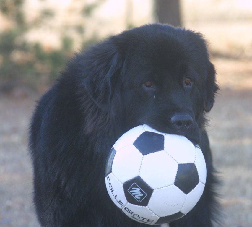 Soccer Bucca