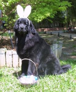 Easter Bucca