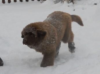 Snow, Snow, Snow
