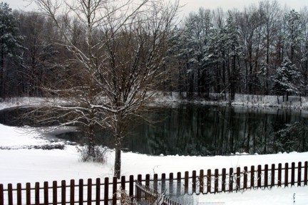 The Pond Landscape