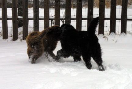 Bucca and RuShou playing