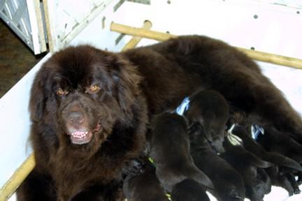 Keoma and the babies