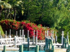 Dock area, Paradise Island